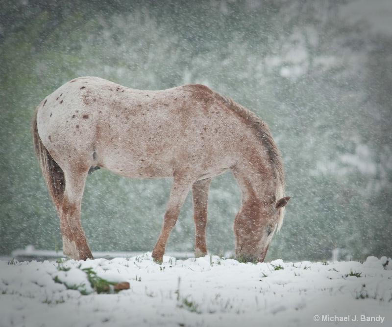 Pheonix in the snow