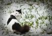 Domino the cat in...