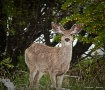 This aint Bambi