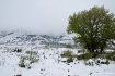 Wyoming Snowstorm...