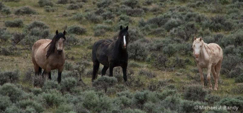Wild Horses in Wyoming 1
