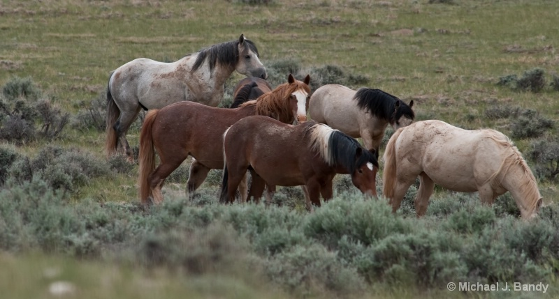 Wild Horses in Wyoming 2