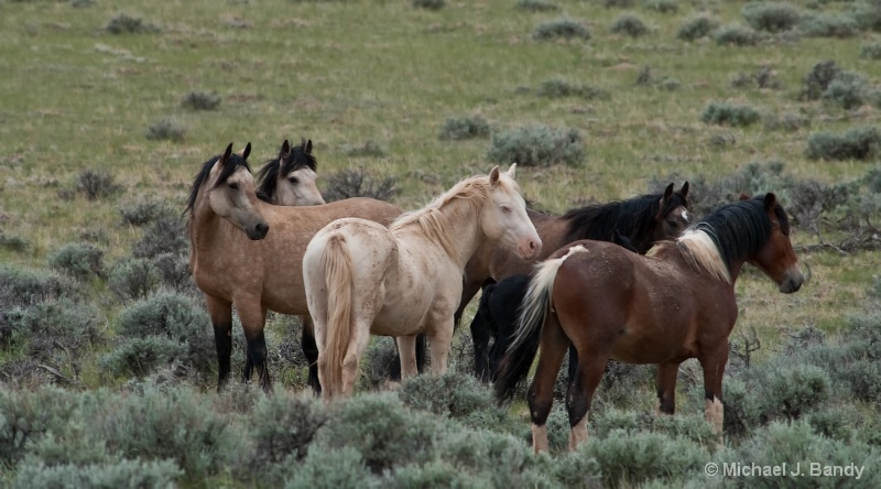 Wild Horses in Wyoming 3
