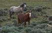 Wild Horses in Wy...