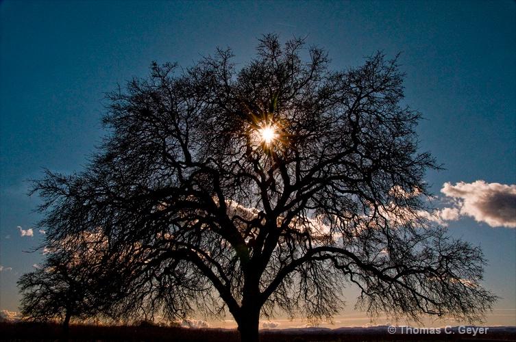 mighty oak - ID: 8570921 © Thomas C. Geyer