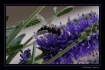 Pollinate!