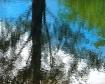 Natural Reflectio...