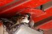 Truck Stop Bird