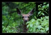 I See You Too!