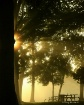 13 misty morning ...