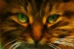 A Devil of a Cat