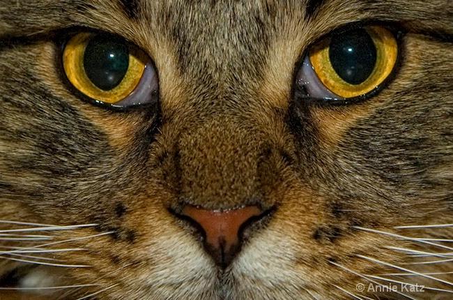 cateyes - ID: 8601595 © Annie Katz
