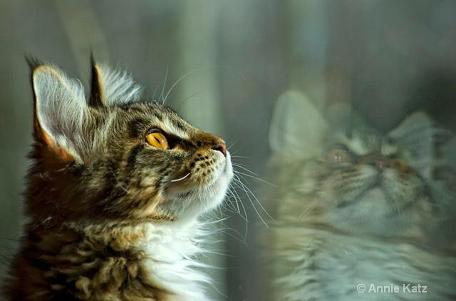 reflections  - ID: 8601599 © Annie Katz