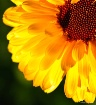 45° of Sunshine-...