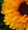 Sunshine After