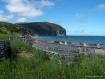 Cape Cormorant - ...