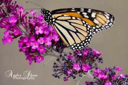 ~Butterfly Dance~