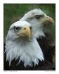Birds of Freedom