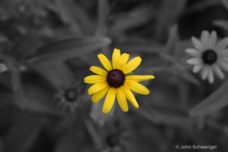 yellow flower highlighted