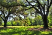 Live Oaks at Boon...