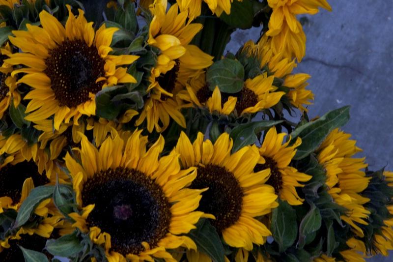 Sunflower #2 - ID: 8641484 © Janice  M. LeCocq