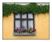 Window in Lyon, F...