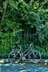 Bicycle, Fence, T...