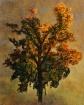 Autumn Oil