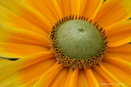 Flower Gold
