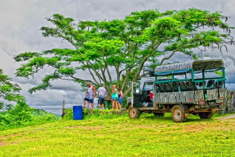 Jamaican Safari