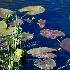 2Lilly Lake - ID: 8660477 © Steve Abbett