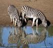 Striped Reflectio...