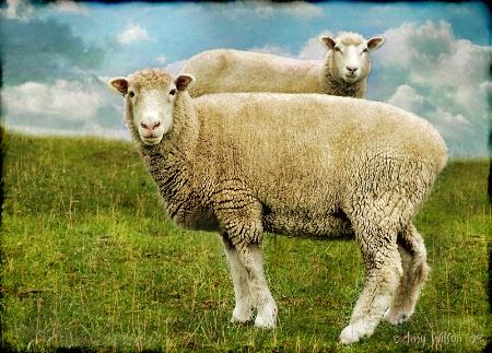 Just 2 Ewe