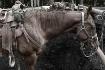 Trail Horses 227