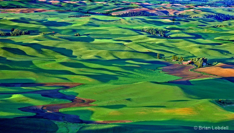 Palouse hills & farms from top Steptoe Butte