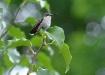 Hummingbird At Re...