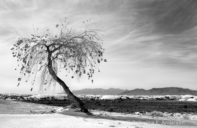 Rooted in Sand