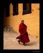 thiksey monk walk...
