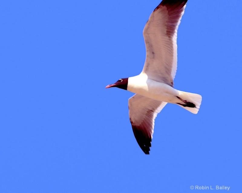 Blue Skies & Laughing Gulls.....