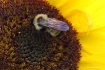 Pollenated