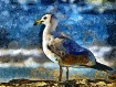 Painted Seagull