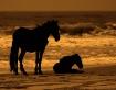 Wild Ponies of Ou...