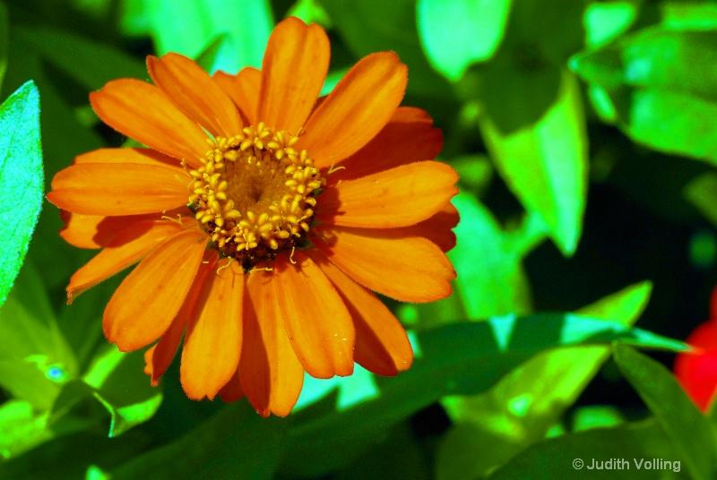 F4 - ID: 8742132 © Judy A. Volling