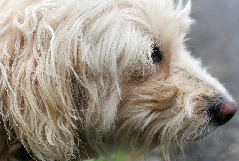 Shaggy dog story #2