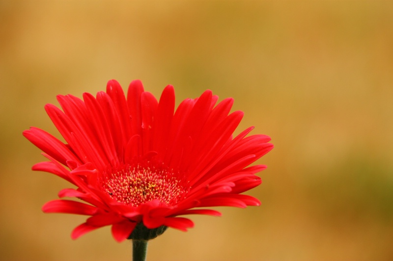 wide angle flower