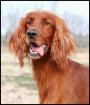 Portrait of Nelli...