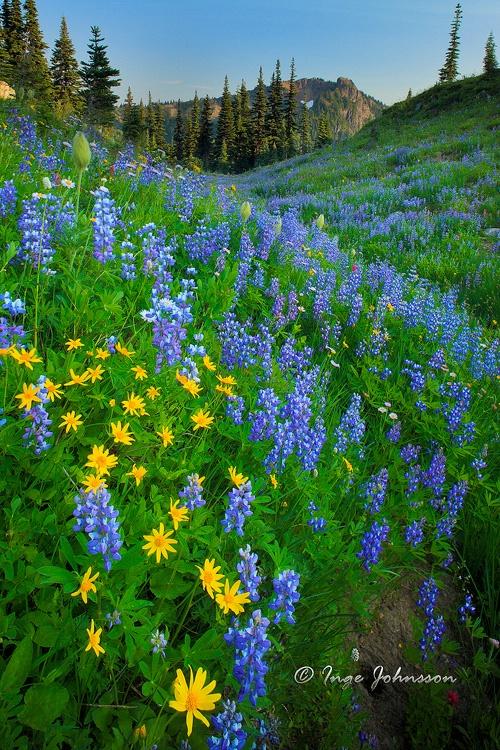 Mount Rainier Naches Loop
