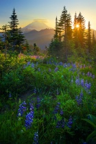 Photography Contest Grand Prize Winner - August 2009: Mount Rainier Sunburst
