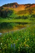 Tipsoo Ridge (Mou...