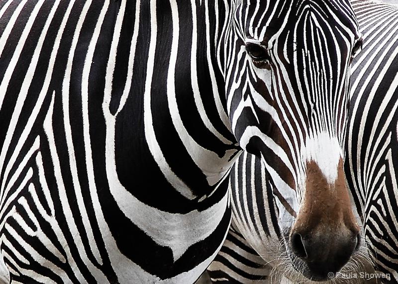 Yikes Stripes!
